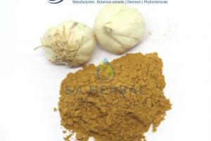Allium Sativum Extract - Manufacturer, Wholesale and Herbs Suppliers