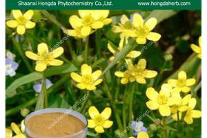 Cat's Claw Extract Powder / Uncaria tomentosa/Cat's Claw