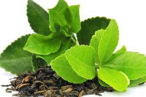Green Tea Extract 70% EGCG