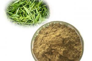 image of Green Tea Extract 45% EGCG
