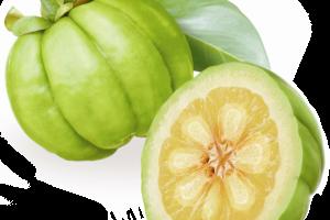 Garcinia Cambogia Extract 50% HCA