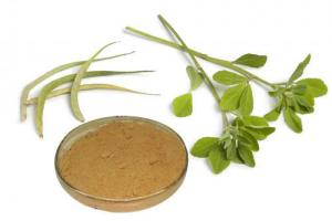 Gymnema Sylvestre Extract 25% Gymnemic Acids