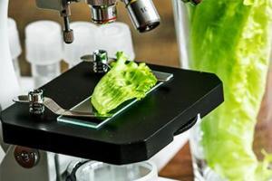 Food Testing   Merieux Nutrisciences US