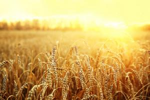 Non-GMO Certification - FoodChain ID Certification