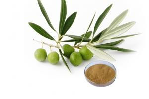 OLIVE LEAF EXTRACT_Forward Farma Inc.
