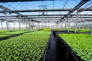 Yeast source organic fertilizer for soil improvement - Angel Yeast