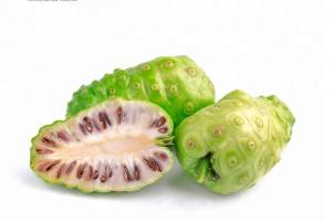 Pure Natural Plant Noni Seed Essential Oil