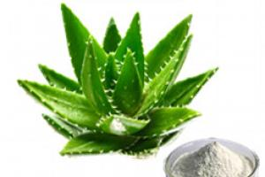 Aloe Vera Gel Spray Dried Powder_Ginkgo Biloba Extract Green Tea Extract Aloe Vera gel freeze dried powder Plant extract Botanical extract