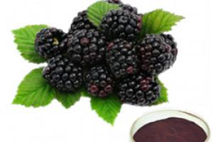 Mulberry Fruit Juice Powder_Ginkgo Biloba Extract Green Tea Extract Aloe Vera gel freeze dried powder Plant extract Botanical extract