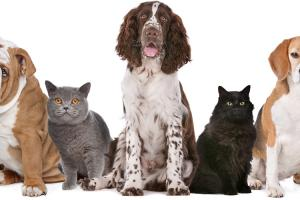 Pet Food Ingredients - Austrade Inc.