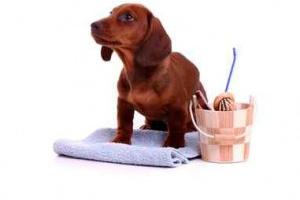 Fragrances for Pet and Animal Products, cat litter, toys, grooming