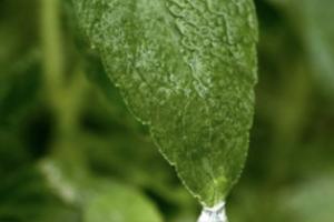 ViaTech® Stevia Sweeteners