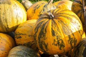Frutarom HealthPumpkin EFLA®940 | Frutarom Health