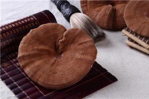 Organic Reishi Mushroom - NATURAL RAW MATERIAL - PRODUCTS-ganoderma,ganoderma lucidum,reishi,GanoHerb Technology(Fujian) Corporation