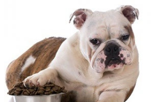 Animal and Pet Nutrition