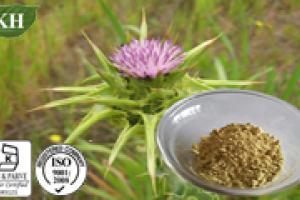 Milk Thistle Extract Silymarin - KINGHERBS LIMITED