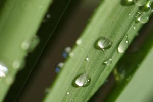 NeoSol - Botanical Ingredient - Linnea
