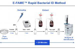 Fatty Acid Analysis | Bacterial ID | MIDI Inc.