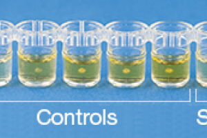 BioKits Egg Assay Kit | Food Safety | Neogen