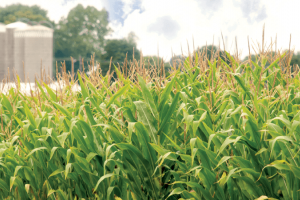 Mycotoxin Reference Materials | Food Safety | Neogen