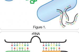 GeneQuence   Food Safety   Neogen