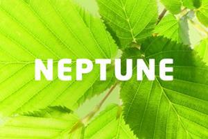 Cannabis Business - Neptune