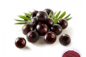 Acai Berry Powder - Plant Extract - Organic Herb Inc