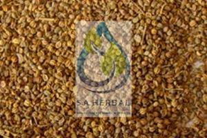 Apium Graveolens Seed Extract Standardized Herbal Extract Manufacturer