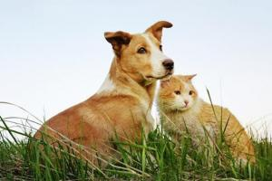 AGRO-VET | PROBIOTICS FOR PET - Sacco System