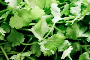Dried cilantro | Dried Vegetables | Silva International - Silva International