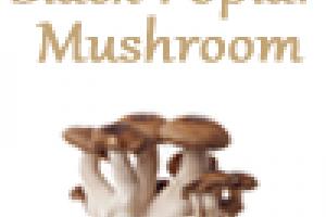 Super Beta Glucan, Medicinal Mushroom Beta Glucans for Immune Health | Medicinal Mushrooms