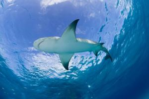 Shark Cartilage Powder | Waitaki Biosciences