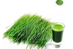 barley powder best water sobulity - Gaoyuan Bio-Chem