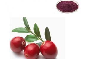 Cranberry Extract Powder - Gaoyuan Bio-Chem