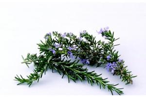 Rosemary Oil - Product - XD Market