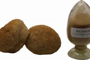 Hericium erinaceus (Lion's Mane) Extract_China mushroom extract powder,mushroom extract,mushroom powder,maitake,shiitake,reishi extract