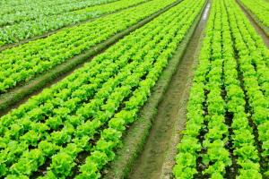 Crop Thruster 1-0-0   Liquid Blend - Multiple Fertilizer Applications