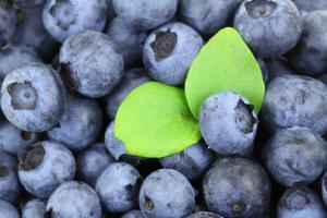 Wild Blueberry Powder - Fruit D'Or