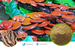 Reishi Pure Extract - Ling Zhi: Treasure of the East Herbs, Distributor of Granule Chinese Herbs made by TianJiang pharmaceutical