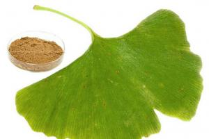 GINKGO BILOBA EXTRACT (USP)_Forward Farma Inc.