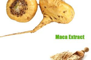 MACA EXTRACT_Forward Farma Inc.