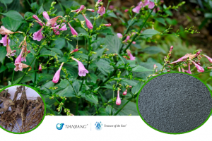 Indigo Pure Extract - Qing Dai: Treasure of the East Herbs, Distributor of Granule Chinese Herbs made by TianJiang pharmaceutical