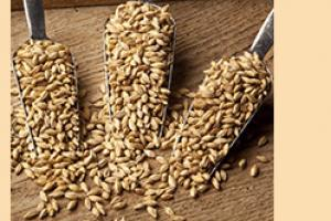 Briess Pale Malts for Distilling