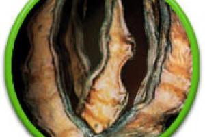 Refined Locust Bean Gum | GENU GUM | CP Kelco