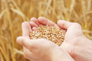 Wheat Oligopeptide – smartpep