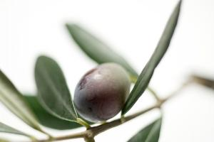 Olive Fruit Extract, Opextan, Indena
